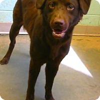 Adopt A Pet :: Thandie Newton - Jersey City, NJ