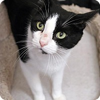Adopt A Pet :: Oreo - Dallas, TX