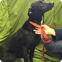 Adopt A Pet :: Eli - Hibbing, MN