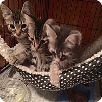 Adopt A Pet :: Ernie - Pasadena, CA