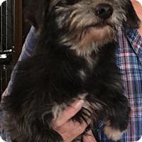 Adopt A Pet :: Jasper - Overland Park, KS