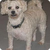 Adopt A Pet :: Libby - Prole, IA