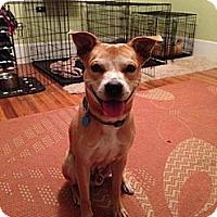 Adopt A Pet :: MIckey Mcfadden - Charlotte, NC