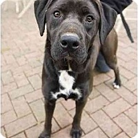Adopt A Pet :: Diva - Huntersville, NC