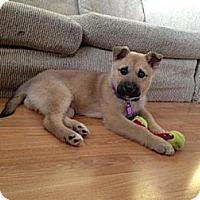 Adopt A Pet :: Uno - Saskatoon, SK