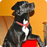 Adopt A Pet :: BOSCOE - Minnetonka, MN
