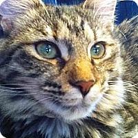 Adopt A Pet :: *Tabby Girl - Winder, GA