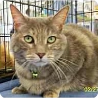 Adopt A Pet :: Grace L - Sacramento, CA