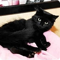 Adopt A Pet :: Salem - Farmingdale, NY