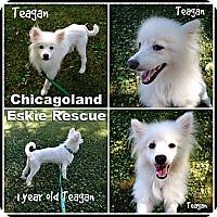 Adopt A Pet :: Teagan - Elmhurst, IL