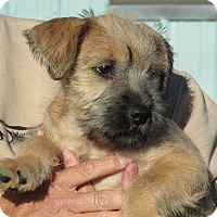Adopt A Pet :: Carlton - Greeley, CO