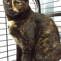 Adopt A Pet :: Sofia Vergara - Richboro, PA
