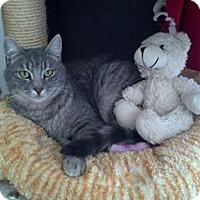 Adopt A Pet :: Selah - Calimesa, CA