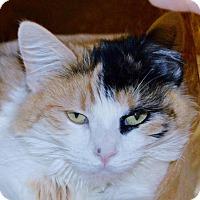 Adopt A Pet :: Fiona - Winchester, CA
