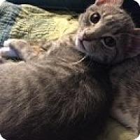 Adopt A Pet :: Lana - McHenry, IL