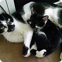 Adopt A Pet :: Clover - Novato, CA