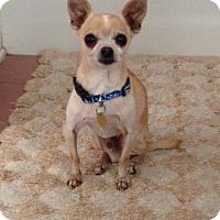 Adopt A Pet :: Chipie (4 lbs.) - Studio City, CA