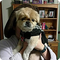 Adopt A Pet :: Bowie - Chantilly, VA