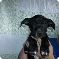 Adopt A Pet :: Jag - Oviedo, FL