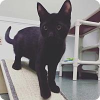 Adopt A Pet :: Melia - Mt. Pleasant, MI
