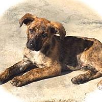 Adopt A Pet :: Tallulah - Ijamsville, MD