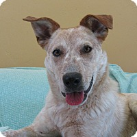 Adopt A Pet :: Bentley - Ridgway, CO