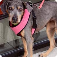 Adopt A Pet :: VELMA - Albany, NY