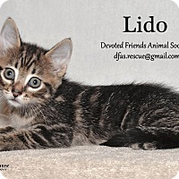 Adopt A Pet :: Lido - Ortonville, MI