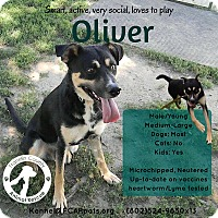 Adopt A Pet :: Oliver - Jefferson, NH