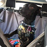 Adopt A Pet :: Barney - Fort Atkinson, WI