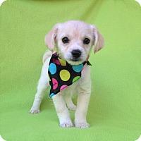 Adopt A Pet :: Nora - Burbank, CA