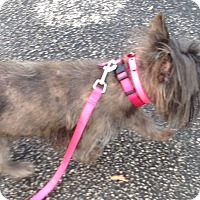 Adopt A Pet :: Toby - West Palm Beach, FL