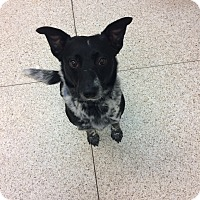 Adopt A Pet :: Riggs - University Park, IL
