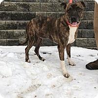 Adopt A Pet :: Harry - Poughkeepsie, NY