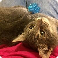 Adopt A Pet :: Dexter - Richmond, VA