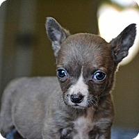 Adopt A Pet :: Finch - Staunton, VA