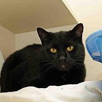 Adopt A Pet :: MAX - Pittsburgh, PA
