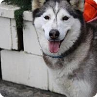 Adopt A Pet :: Leah - Yucaipa, CA
