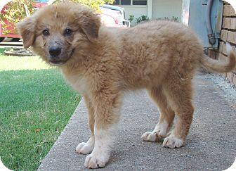 Pyrenees Dog Rescue Oklahoma