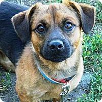 Adopt A Pet :: Parker - Cheyenne, WY