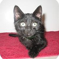 Adopt A Pet :: Stella - Shelton, WA