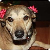 Adopt A Pet :: SANDIE - Hagerstown, MD
