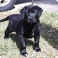 Adopt A Pet :: Angus - Minneola, FL
