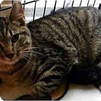 Adopt A Pet :: Squirt - Alexandria, VA