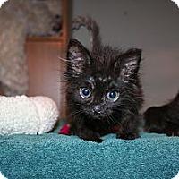 Adopt A Pet :: Verity - Santa Rosa, CA