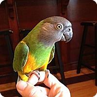 Adopt A Pet :: Sid - St. Louis, MO