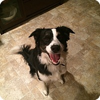 Adopt A Pet :: WESLEY - Nampa, ID