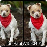 Adopt A Pet :: Jon Paul - Simi Valley, CA