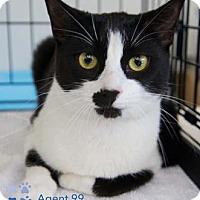 Adopt A Pet :: Agent 99 - Merrifield, VA