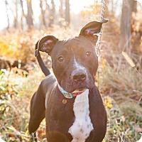 Adopt A Pet :: Maggie - Villa Park, IL